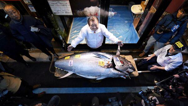 Kiyoshi Kimura junto al atún de 278 kilogramos - Sputnik Mundo