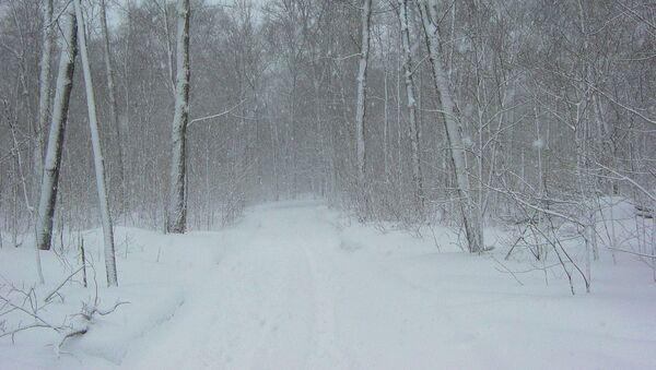 Un campo nevado (archivo) - Sputnik Mundo