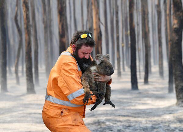 Australia en llamas: imágenes postapocalípticas y millones de animales muertos   - Sputnik Mundo