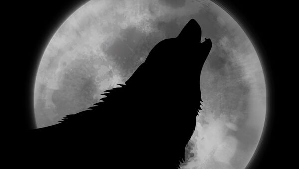 La Luna y un lobo - Sputnik Mundo