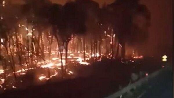 Este es el infernal paisaje que dejan los incendios en Australia - Sputnik Mundo