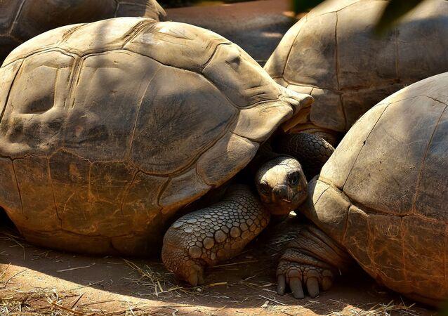 Una tortuga (imagen referencial)