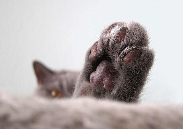 Una pata de un gato (imagen referencial)