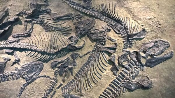 Los fósiles (imagen referencial) - Sputnik Mundo