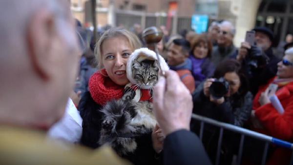 Centenares de tiernas mascotas son bendecidas en Madrid - Sputnik Mundo