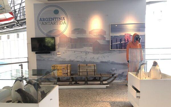 La Antártida tiene su espacio relevante dentro de la exposición permanente - Sputnik Mundo
