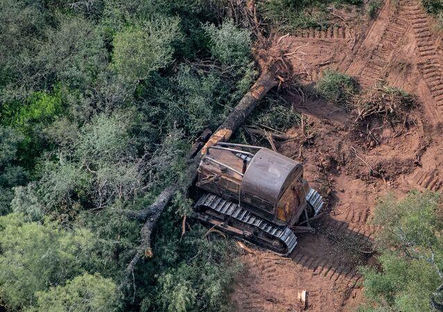 Topadoras derribando árboles en El Impenetrable, al norte de la provincia de Chaco, Argentina