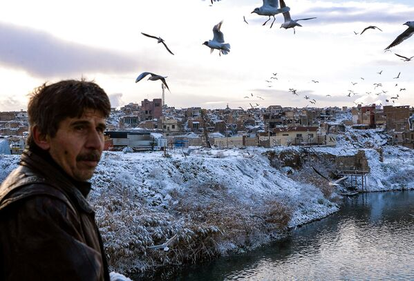 La mayor parte de los habitantes de Mosul era árabe. No obstante, también existían minorías de turkmenos, yazidíes y kurdos. Los habitantes y procedentes de Mosul se llaman mosulíes. En la foto: unas gaviotas sobrevuelan el Tigris en Mosul en febrero de 2020. - Sputnik Mundo