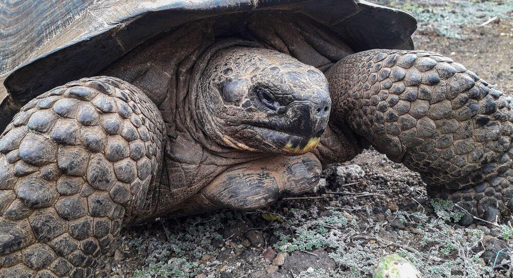 Una tortuga gigante, foto de archivo