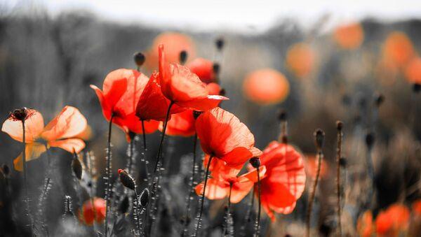 Flores, imagen referencial - Sputnik Mundo