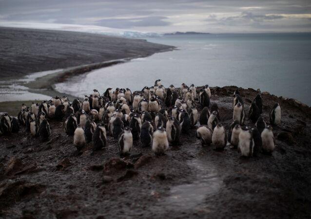 Situación en la Antártida