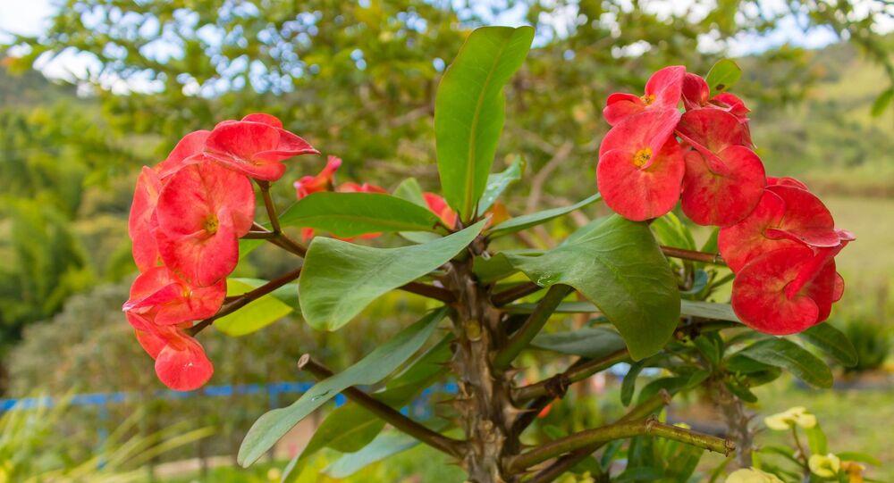 Flores colombianas (imagen referencial)