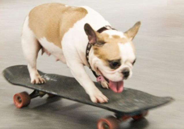 Sonya, la perra que ama montar en patineta
