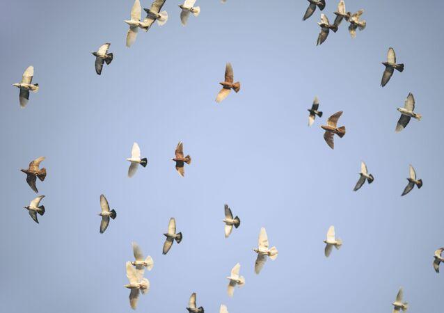 Pájaros (imagen referencial)