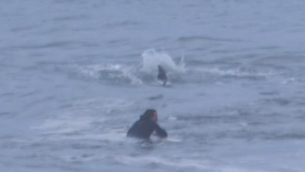 Un surfista nada cerca de un tiburón sin darse cuenta del peligro mortal - Sputnik Mundo