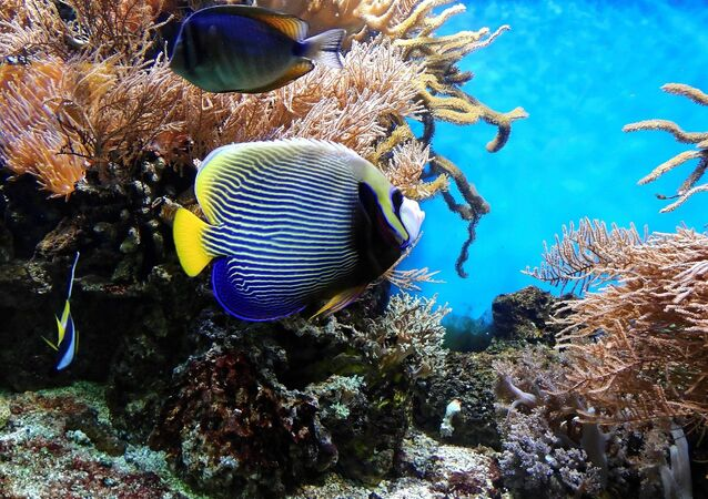 Un arrecife de coral (imagen referencial)