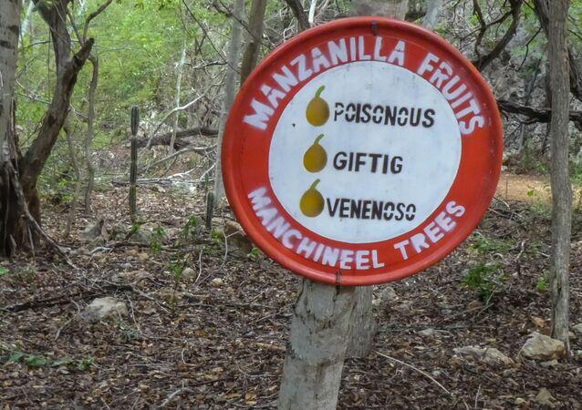 Advertencia sobre el árbol de Hippomane mancinella