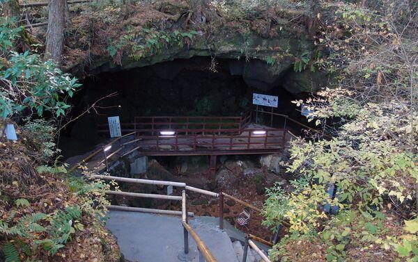 El bosque de Aokigahara en Japón - Sputnik Mundo