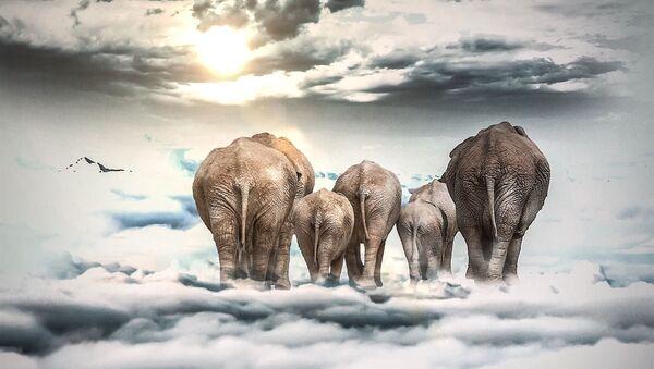 Elefantes sobre nubes - Sputnik Mundo