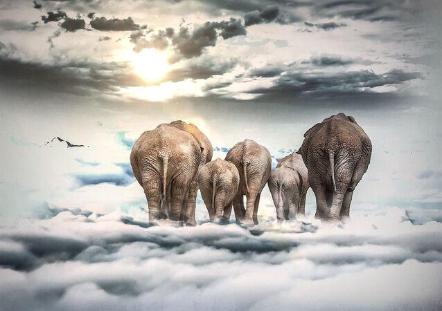 Elefantes sobre nubes