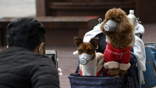 Dos perros en mascarillas en Shanghái durante el brote del coronavirus - Sputnik Mundo