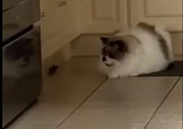 Un ratón y un gato