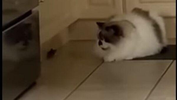Un ratón y un gato - Sputnik Mundo