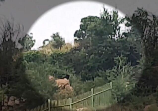 Insólitas imágenes: una especie rara de leopardo negro es avistada en Sudáfrica