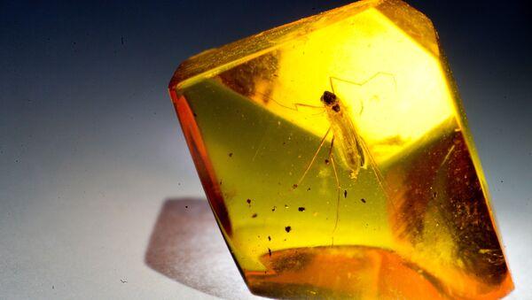 Un insecto en el trozo de ámbar - Sputnik Mundo