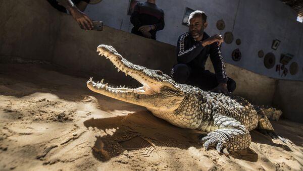En este lugar del mundo los cocodrilos son mascotas  - Sputnik Mundo