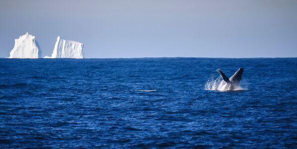 Viaje al hemisferio sur: asombrosos paisajes de la Antártida desde un buque de investigación  - Sputnik Mundo