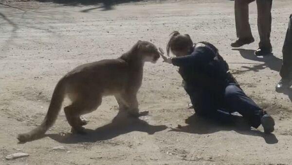 Un puma ataca a una oficial de policía - Sputnik Mundo