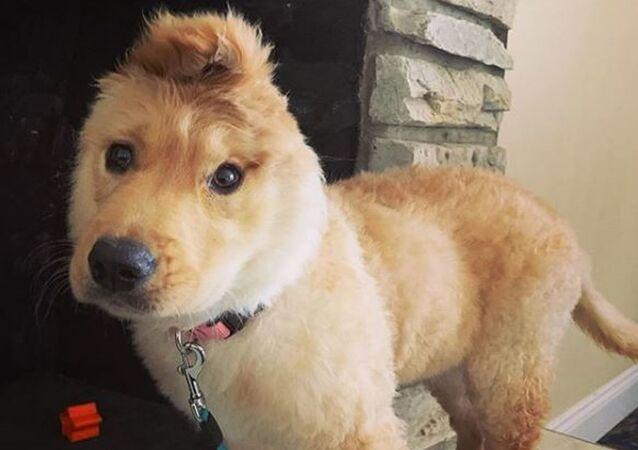 Rae, la perrita con una sola orejita