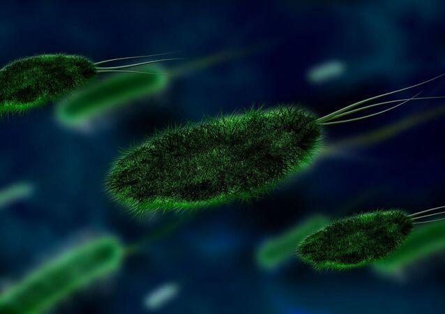 Virus. Bacteria. Imagen referencial