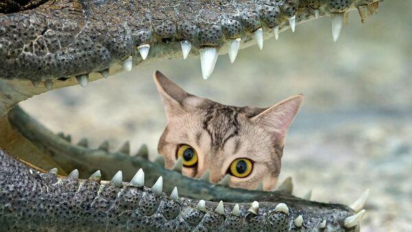 Un gato y un cocodrilo - Sputnik Mundo