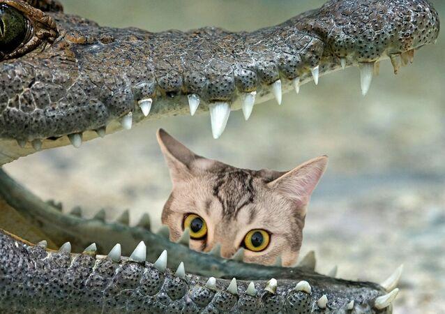 Un gato y un cocodrilo