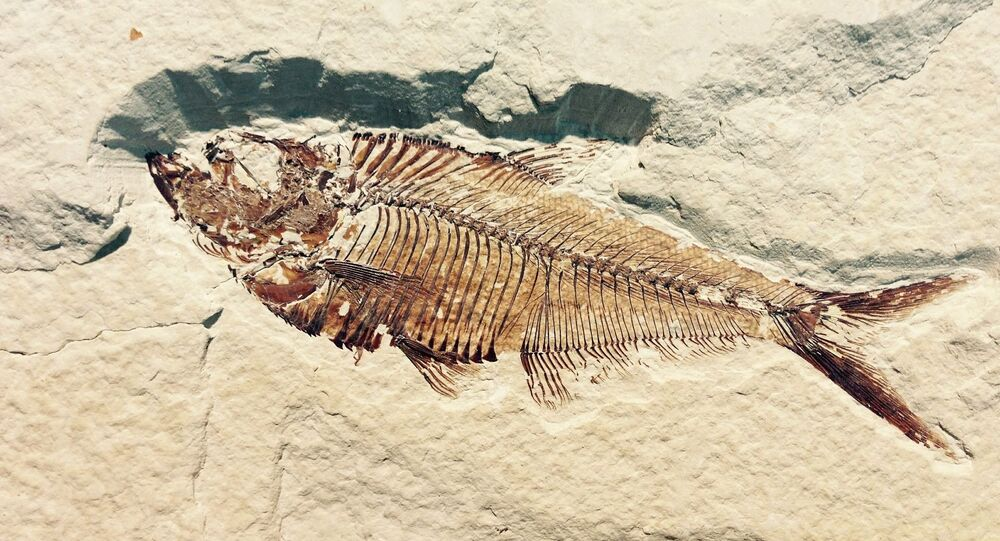 Un fósil (imágen referencial)