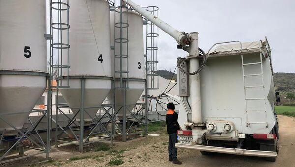 Agricultures españoles trabajan a pesar de la crisis - Sputnik Mundo