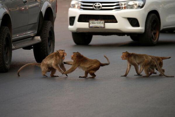 Lopburi: la ciudad tailandesa que el coronavirus convirtió en el imperio de los monos  - Sputnik Mundo