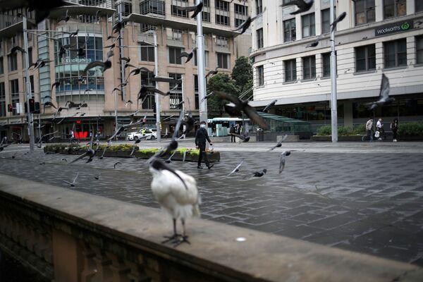 Los animales salvajes invaden las ciudades en plena pandemia - Sputnik Mundo