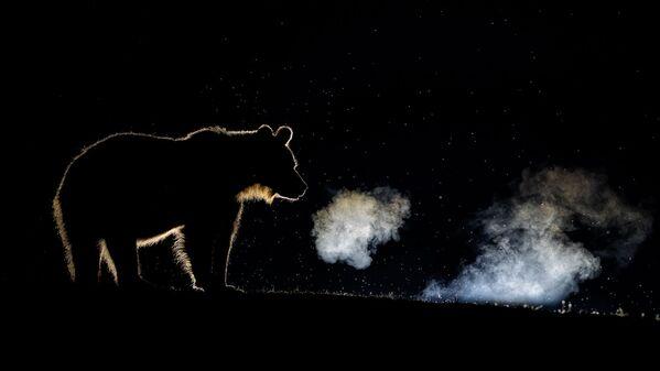 Naturaleza en estado puro: las mejores fotos del concurso TTL Photographer of the Year 2020  - Sputnik Mundo