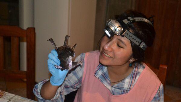 Raquel Galeón, la investigadora boliviana, experta en murciélagos - Sputnik Mundo