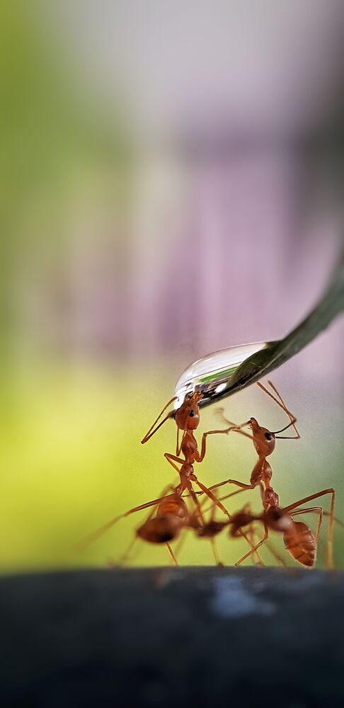 La foto 'Hormigas con sed', de un fotógrafo filipino, ganador del concurso The World's Best Photos of #Water2020. Fue tomada en el jardín del fotógrafo quien da de beber a los insectos.