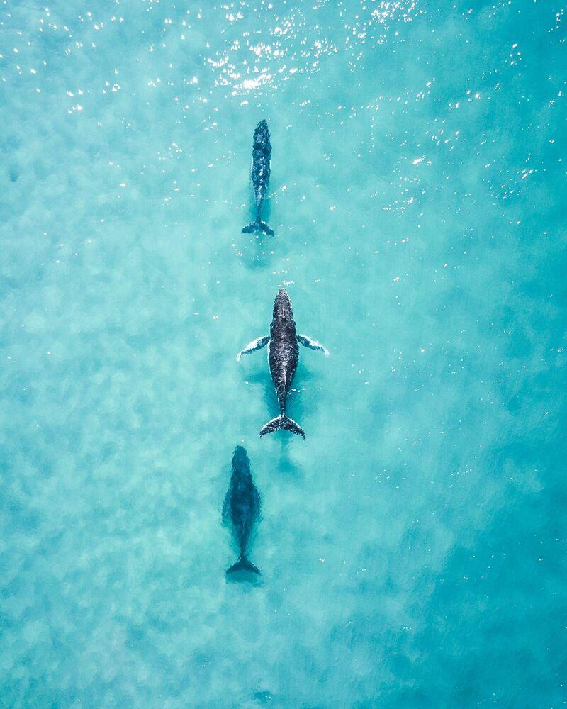 La foto 'Ver a estos tres navegando por la costa me hizo el día', de un fotógrafo australiano, presentada en el concurso The World's Best Photos of #Water2020.