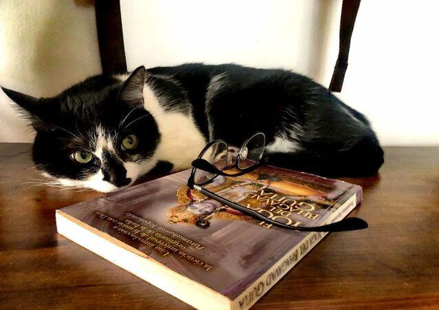 Un gato durante la cuarentena