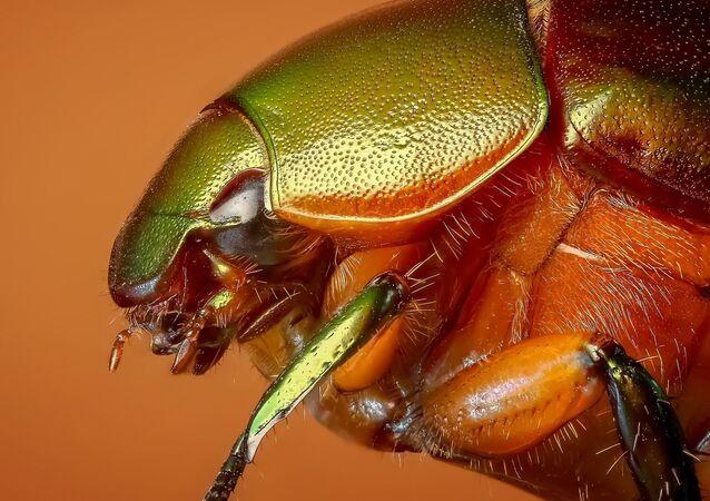 Un escarabajo (imagen referencial)