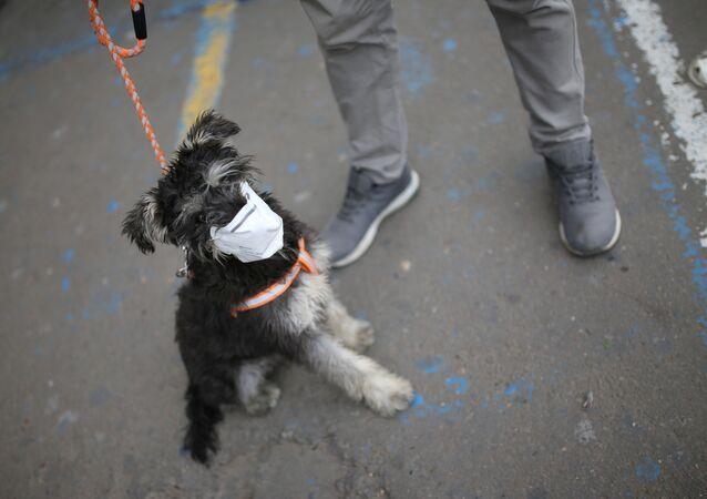 Un perro lleva puesta una mascarilla en Soacha, Colombia (archivo)