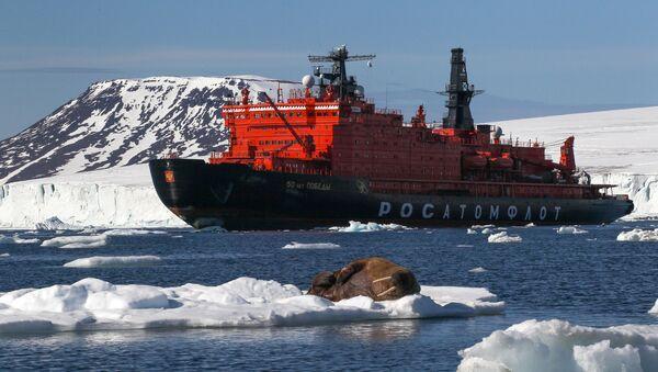 Morsa en el hielo (imagen referencial) - Sputnik Mundo