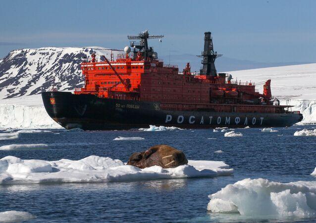 Morsa en el hielo (imagen referencial)