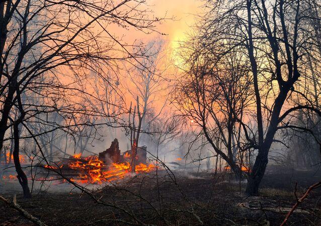 Incendio forestal en la zona de Chernóbil